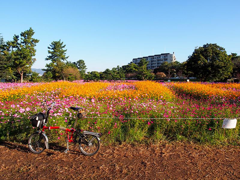 武庫川コスモス園 2016