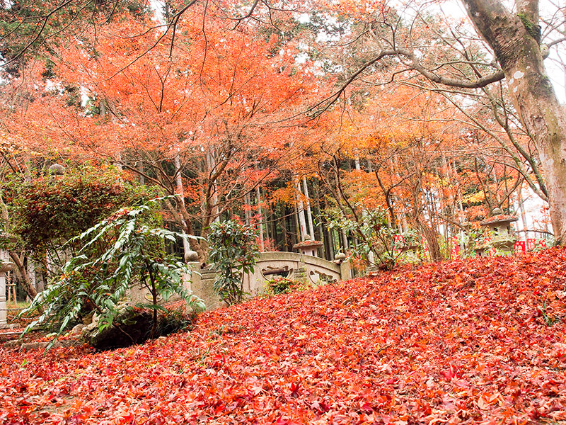 丹波 高山寺
