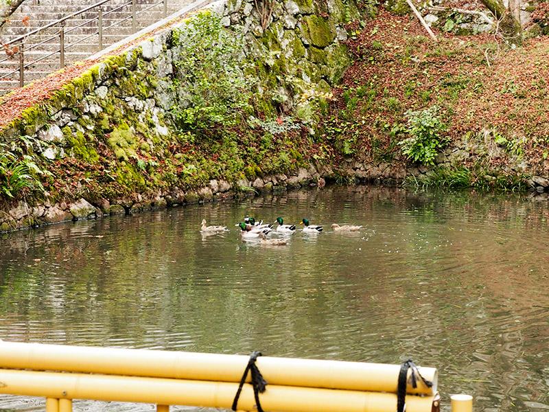 円通寺 放生池