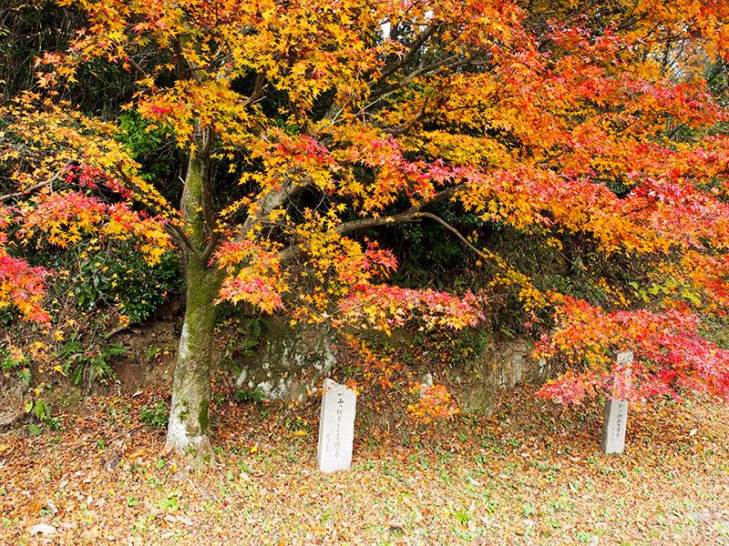 紅葉と歌碑