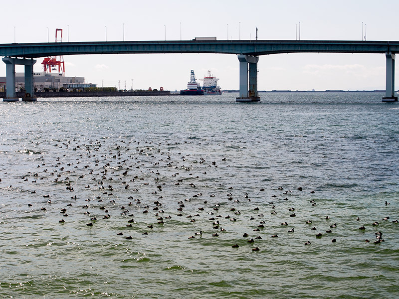 鳴尾浜 湾岸線