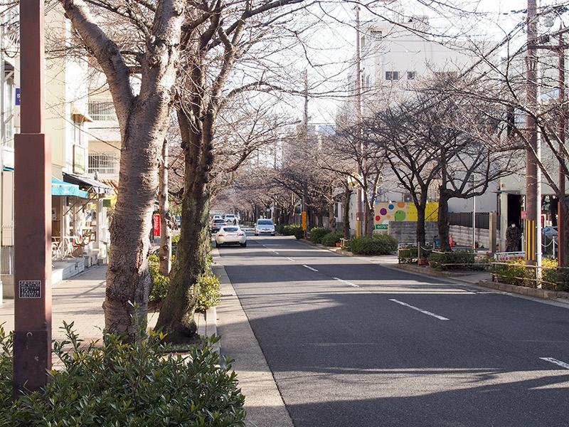 西国街道 茶屋之町桜通り付近
