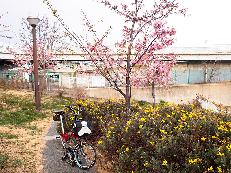 西郷川河口公園 桜 2017