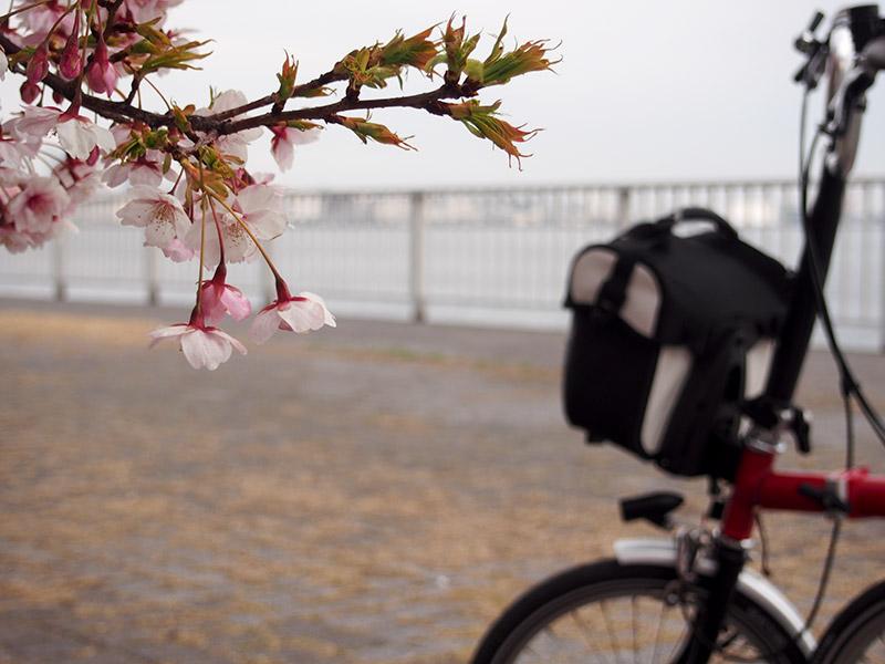 灘浜緑地 桜 2017