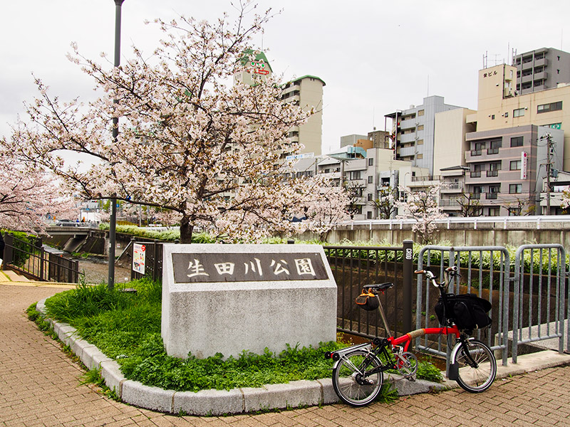 生田川公園 桜 2017