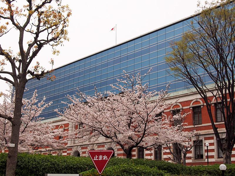 神戸地裁 桜 2017