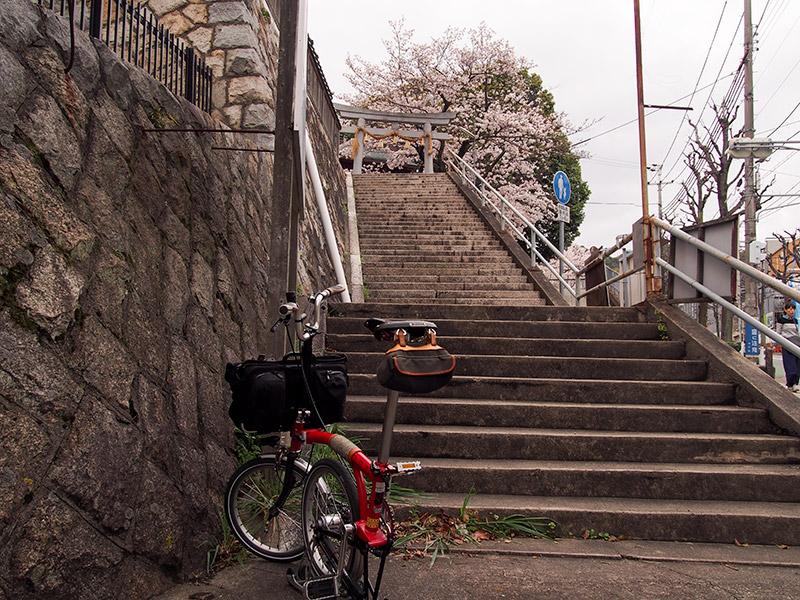 熊野神社 桜 2017