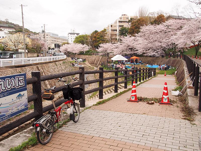 宇治川公園 桜 2017