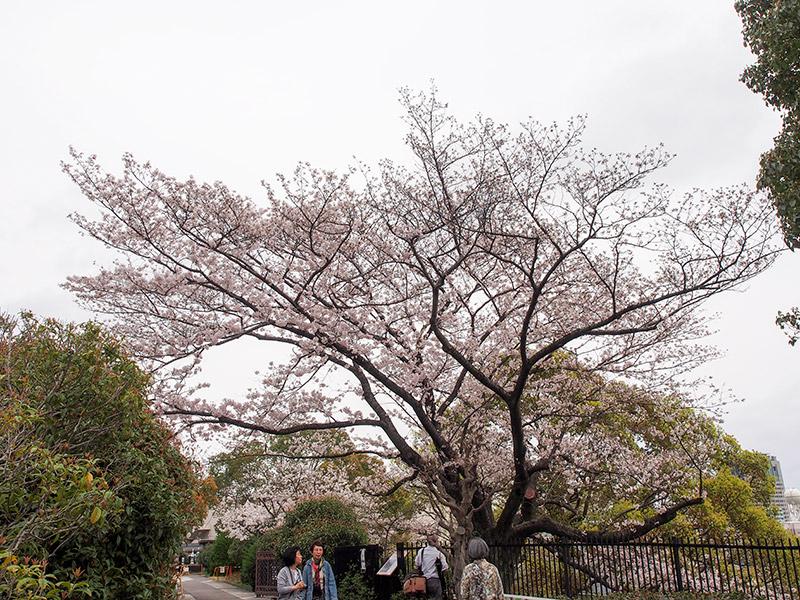 奥平野舞桜 2017