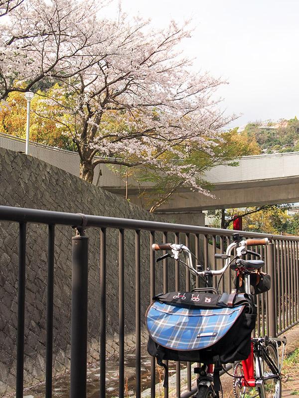 桜谷川 桜 2017
