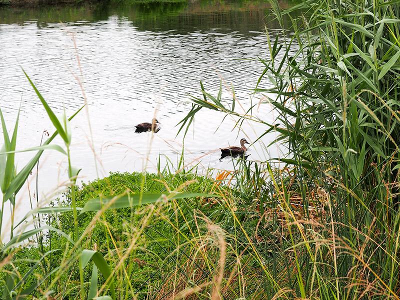 平磯緑地 なぎさの池