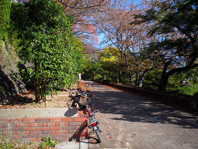 五月山緑地都市緑化植物園 2017