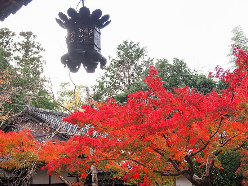 赤山禅院 紅葉 2017