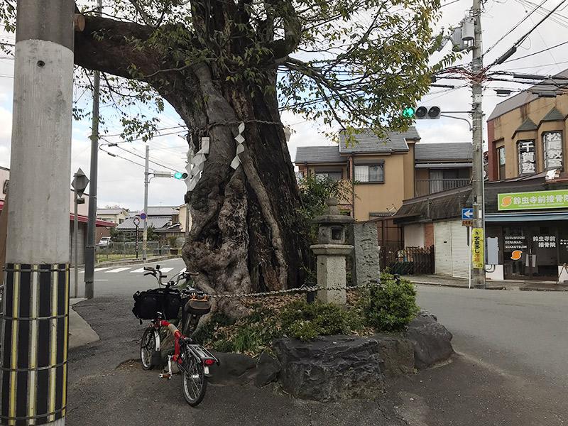 松尾谷 椋の木