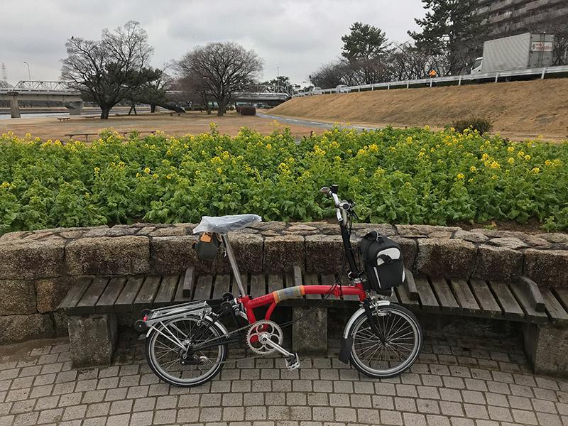 武庫川河川敷 菜の花 2018