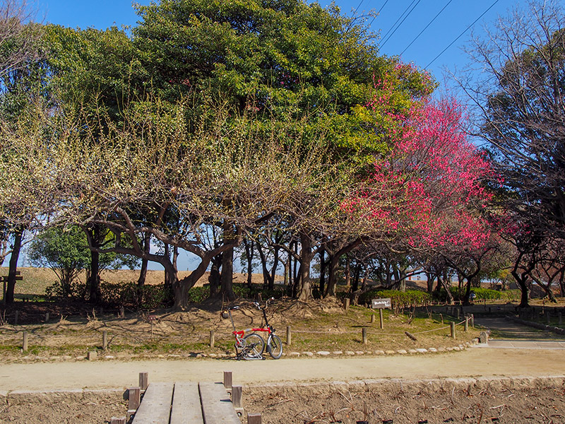 尼崎市立農業公園 梅林 2018