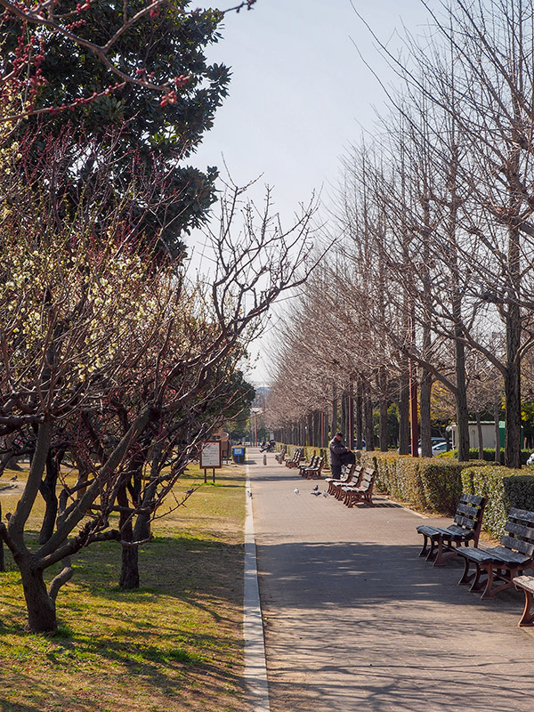 小田南公園 梅林 2018