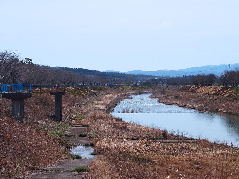 三田 武庫川さくら回廊 2018