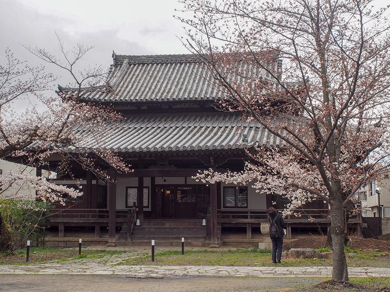 立本寺 桜 2019