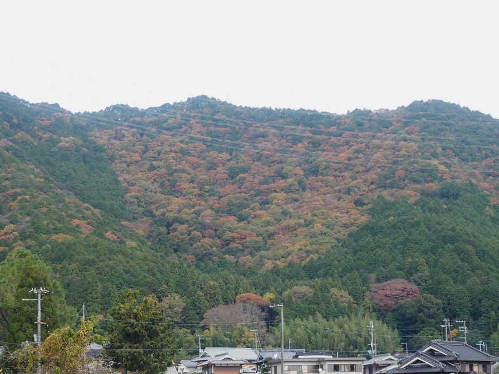 兵庫県道532号 眺望