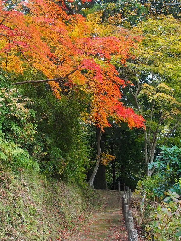甲賀山公園 紅葉 2019