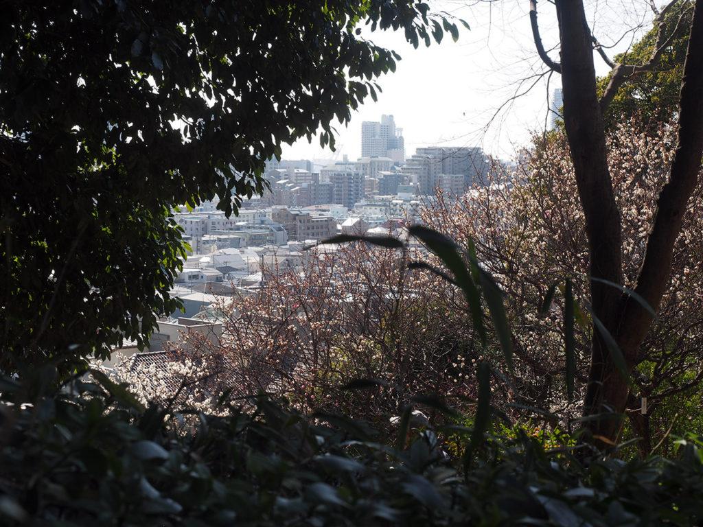 岡本梅林公園 2020