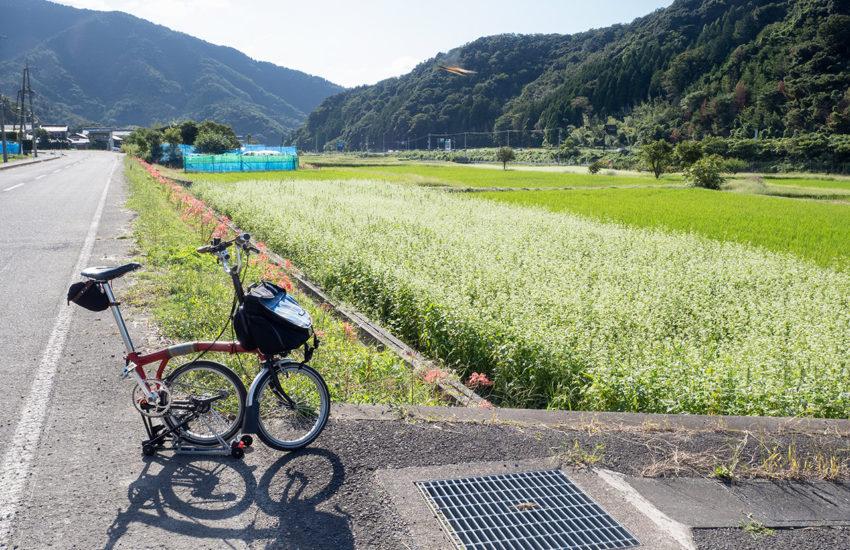 福井県道118 そばの花