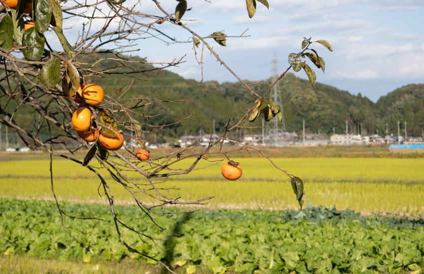 丹波篠山 2020