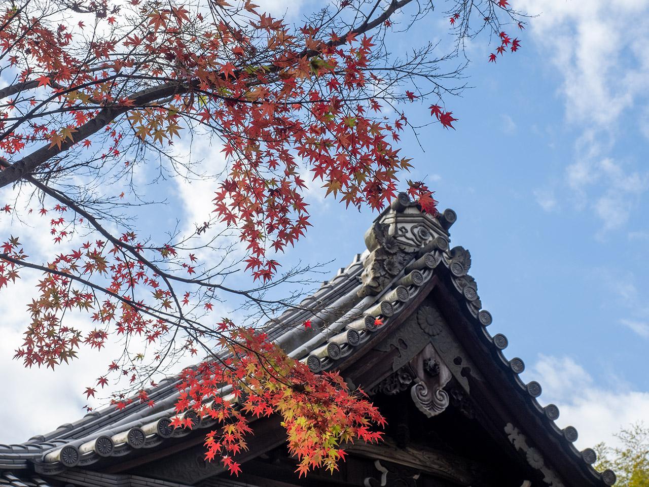 赤山禅院 紅葉 2020